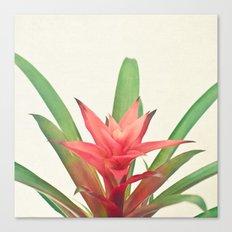 Bromelia Canvas Print