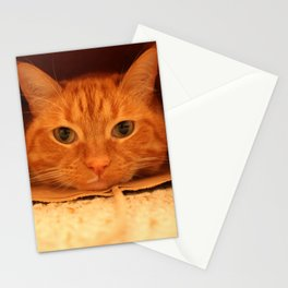 Cat in a Bag Stationery Cards