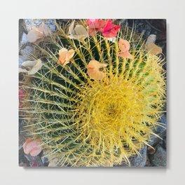Barrel Cactus With Colorful Flower Petals Metal Print