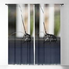 Long antennae for feelers of wide world Blackout Curtain