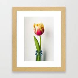 Tulip beauty Framed Art Print