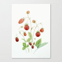 Wild Strawberries Canvas Print