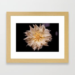 White isolated flower Framed Art Print