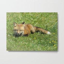 FOX - 3 - FULL BODY, LOOKING AT YOU Metal Print
