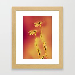 two yellow and red Daisies Framed Art Print