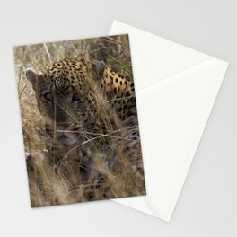 Wide Eyed Stationery Cards