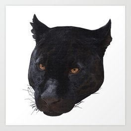 Panther face canvas, animals, cat Art Print