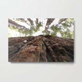 Redwoods- Bark Metal Print