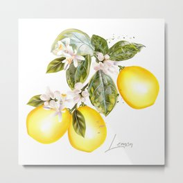 Lemon tree with flowers and fruits in vintage style Metal Print