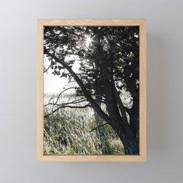 Grass Glowing Beneath A Tree Framed Mini Art Print