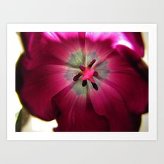 Up Close Purple Tulip Art Print