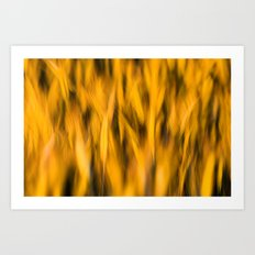 Sunset Wheat Art Print