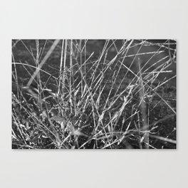 vegetal Canvas Print