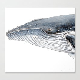 Humpback whale portrait Canvas Print