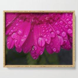 Macro of water drops resting on the petals of a beautiful dark pink Gerbera flower. Serving Tray