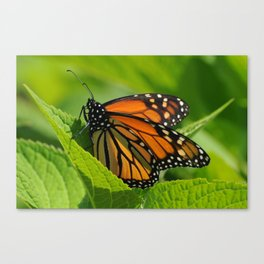 Surprise Visitor Canvas Print