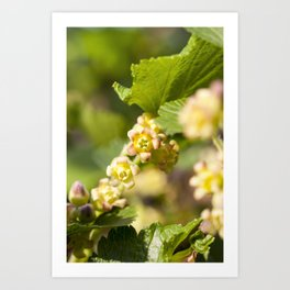 beautiful young currant Art Print