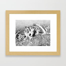 Transitions in nature part 3 Framed Art Print
