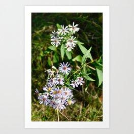 Flowers of autumn  Art Print