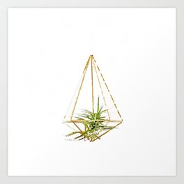 Air Plant no. 1 Art Print