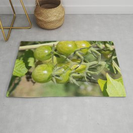 Cherry tomatoes green on the vine Rug