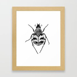 Beetle 02 Framed Art Print