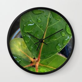 Raindrops on Baby Sea Grape Leaves Wall Clock