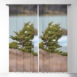 Patagonian Tree Blackout Curtain