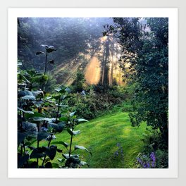Magic Morning Sunlight Art Print