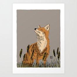 """Happy Fox"" Red fox smelling something in summer fog Art Print"