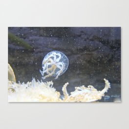 Bubbly JellyFish  Canvas Print