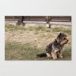 Patient Pup Canvas Print