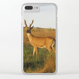 Stag Clear iPhone Case
