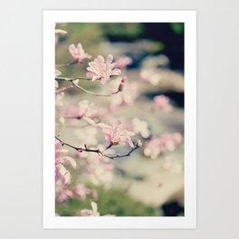 {Magnolia} Art Print