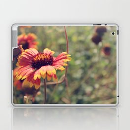 Gaillardia flower Laptop & iPad Skin
