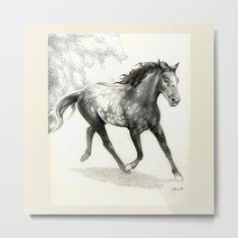 Appaloosa Stallion Metal Print