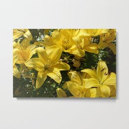 Yellow Lily Flowers Metal Print