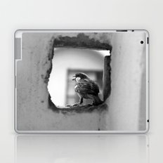 a sparrow Laptop & iPad Skin