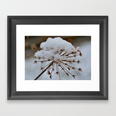 Cow Parsley Framed Art Print