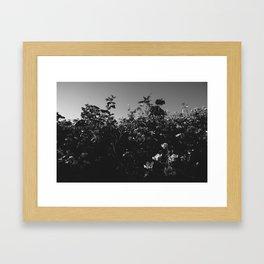 Bushes Framed Art Print