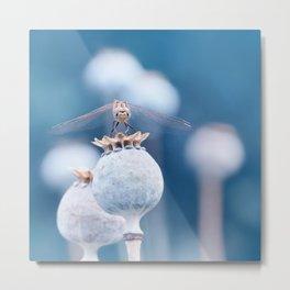 Dragonfly blue Metal Print