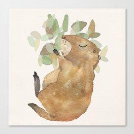 Black Tailed Prairiedog - Sleeping Animals Canvas Print