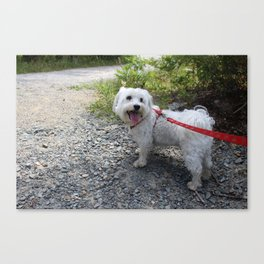 Puppy Going for a Hike Canvas Print