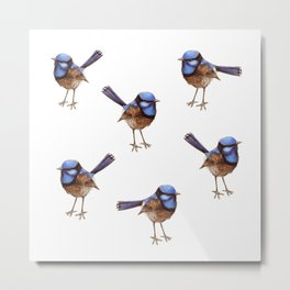 Blue Wrens with Russet Bellies Metal Print
