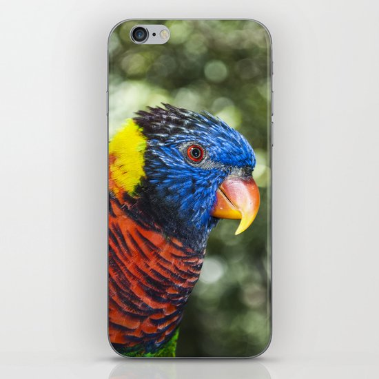 Lorikeet iPhone & iPod Skin