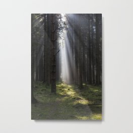 Along the Sunlit Path Metal Print