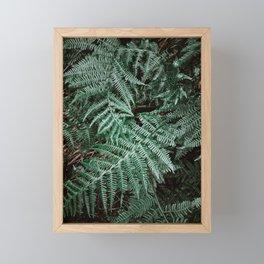 Woodland fern Framed Mini Art Print