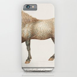 Horse Equus ferus caballus (1596-1610) by Anselmus Botius de Boodt iPhone Case