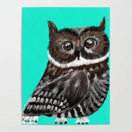 Big Eyed Owl With Aqua Background Poster