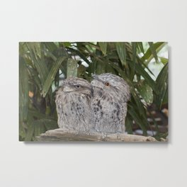 Tawny Frogmouth Bird Metal Print